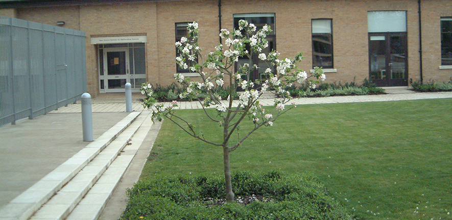 apple tree, descended from one at Newton's birthplace