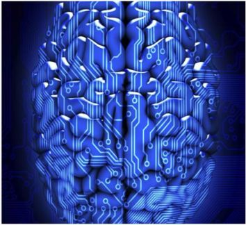 From Neurobiology to Online Gaming and Statistical Modelling